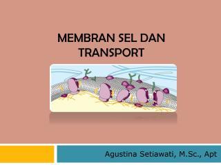 Membran sel dan  transport