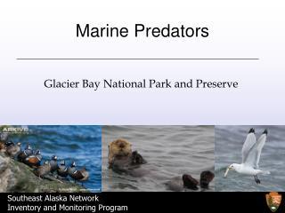 Marine Predators