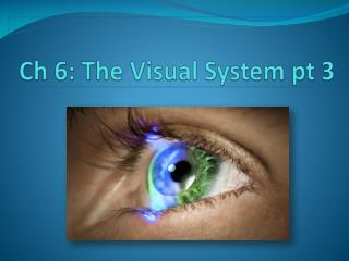 Ch 6: The Visual System pt  3