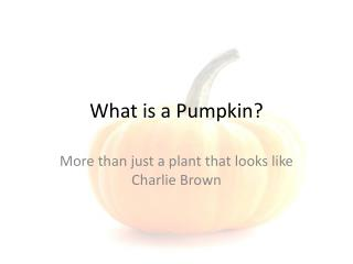 What is a Pumpkin?