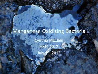 Manganese Oxidizing Bacteria