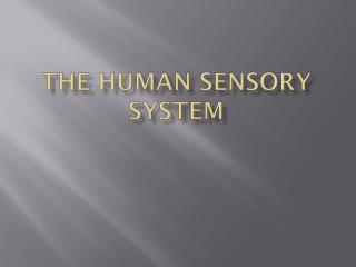 The Human Sensory System