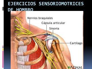 Ejercicios sensoriomotrices de hombro