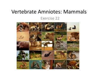Vertebrate Amniotes: Mammals