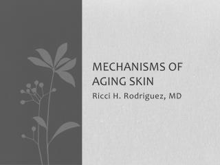 MECHANISMS OF AGING SKIN