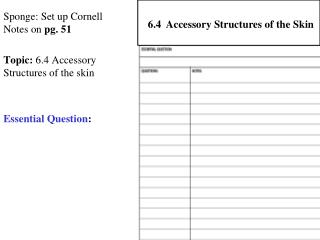 Sponge: Set up Cornell Notes on  pg. 51 Topic:  6.4 Accessory Structures of the skin