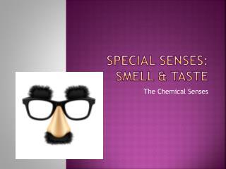 Special Senses: Smell & Taste