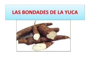 LAS BONDADES DE LA YUCA