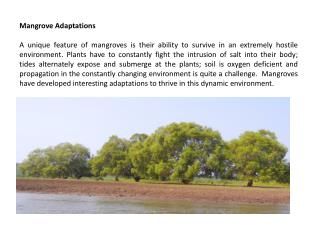 Mangrove Adaptations