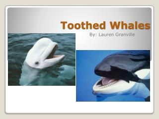 Toothed Whales