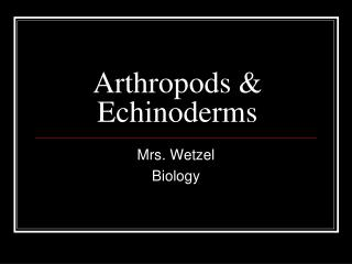 Arthropods & Echinoderms