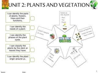 UNIT 2: PLANTS AND VEGETATION