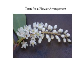 Term for a Flower Arrangement
