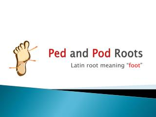 Ped  and  Pod  Roots