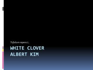 White  Clover  Albert Kim