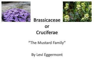 Brassicaceae or Cruciferae
