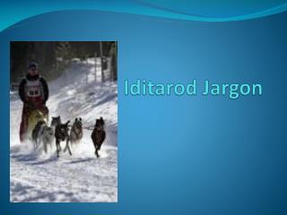 Iditarod Jargon