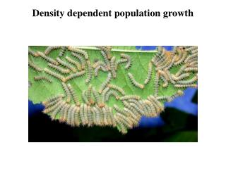 Density dependent population growth
