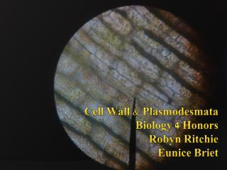 Cell Wall & Plasmodesmata Biology 4 Honors Robyn Ritchie Eunice  Briet