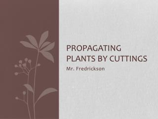 Propagating Plants by Cuttings