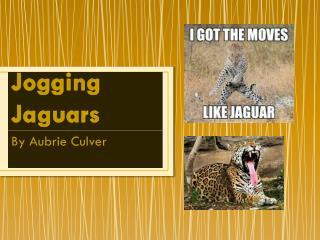 Jogging Jaguars