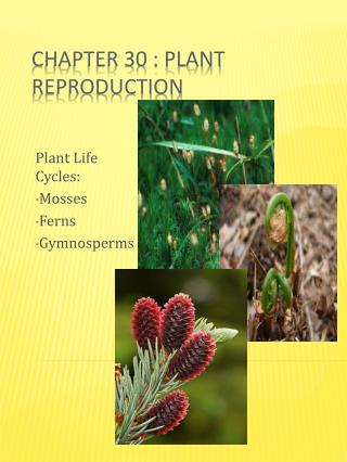 Chapter 30 : Plant Reproduction