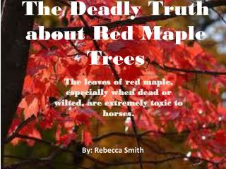 The Deadly Truth about Red Maple Trees