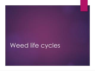Weed life cycles