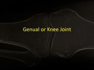 Genual  or Knee Joint