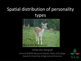 Spatial distribution of  personality types