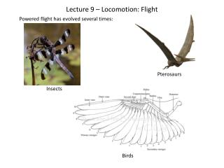 Lecture 9 � Locomotion: Flight
