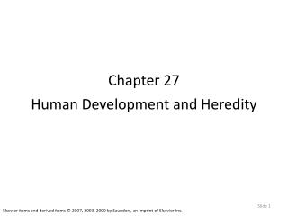 Chapter 27 Human Development and Heredity