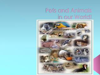 Pets and Animals in our World!