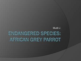 Endangered Species: African Grey Parrot