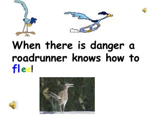 When there is danger a roadrunner knows how to