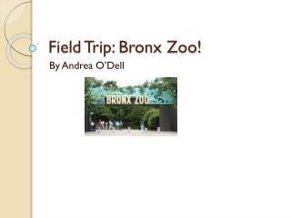 Field Trip: Bronx Zoo!