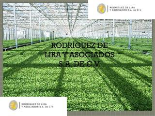 RODRÍGUEZ DE LIRA Y ASOCIADOS S.A. DE C.V.