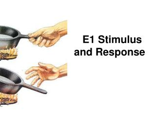E1 Stimulus and Response