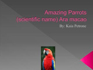 Amazing Parrots (scientific name) Ara macao