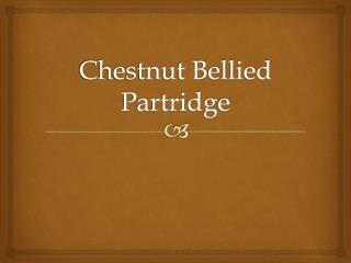 Chestnut Bellied Partridge
