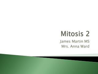 Mitosis 2