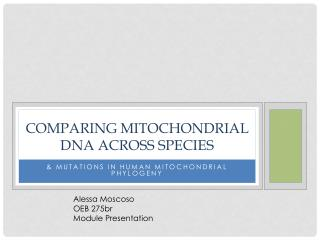 Comparing Mitochondrial DNA across species