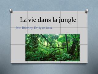 La vie  dans  la jungle