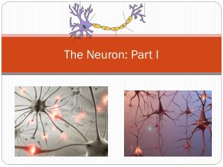 The Neuron: Part I
