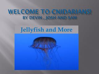 WELCOME TO Cnidarians! By  Devin , Josh  and Sam