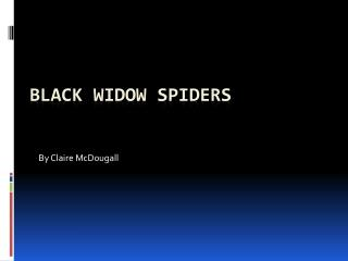 Black Widow Spiders