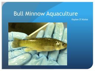 Bull Minnow Aquaculture