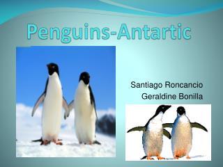 Penguins-Antartic