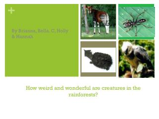 How weird and wonderful are creatures in the rainforests?