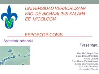 UNIVERSIDAD VERACRUZANA FAC. DE BIOANALISIS XALAPA EE. MICOLOGIA  Esporotricosis
